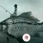 El amor y los peces