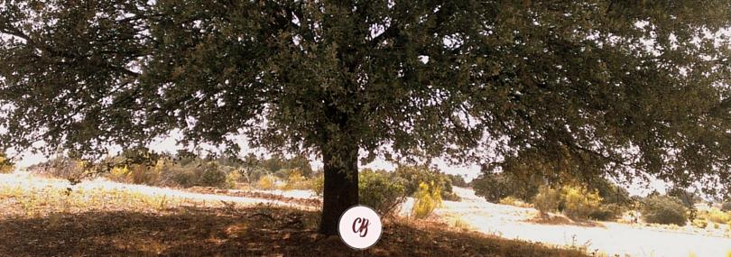 poesía árbol encina
