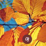 Las hojas no caen, se sueltan